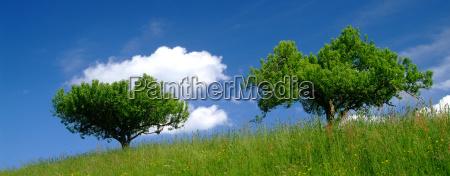 tree with sky 4