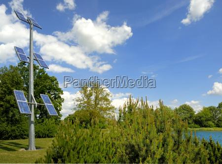 luz ambiente arvore poder arbusto energia