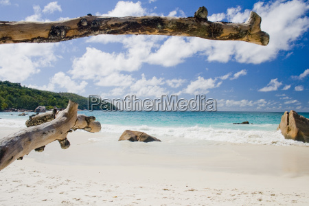 ferias tronco praia beira mar da