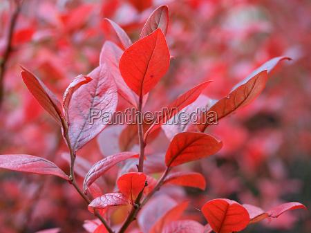 cor humor vermelho folhas queda outono
